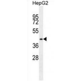 AP53463PU-N