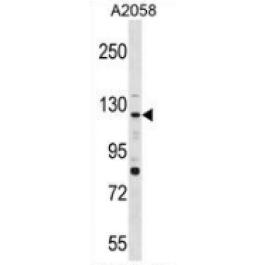 AP53516PU-N
