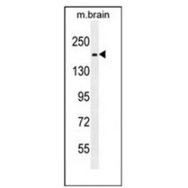 AP53598PU-N