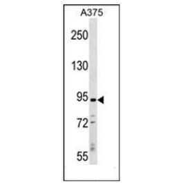 AP53612PU-N