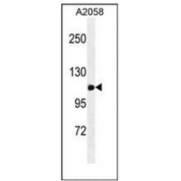 AP53673PU-N