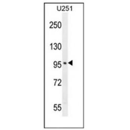 AP53980PU-N