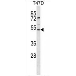 AP54117PU-N