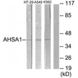 C12046-2