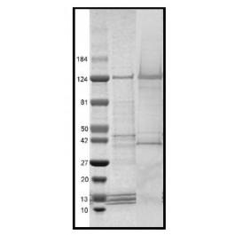 H2V146-1