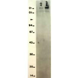RA19077-100