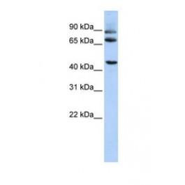NBP1-59589