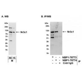 NBP1-78773