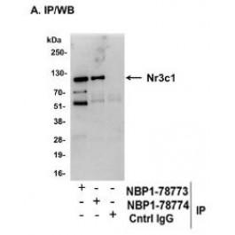 NBP1-78774