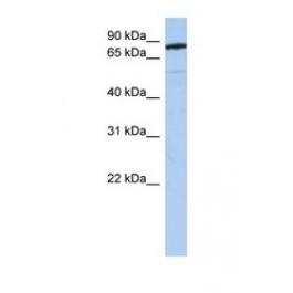 NBP1-69276