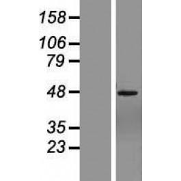 NBL1-18163