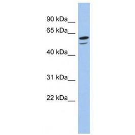 TA339525