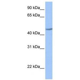 TA341463