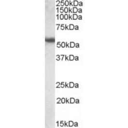 TA305710