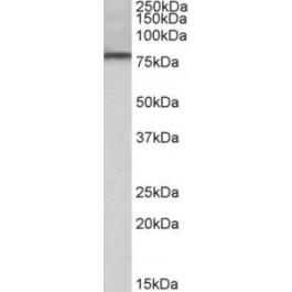TA311206