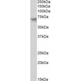 TA334188