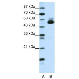 TA330055