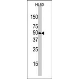 PAB2837