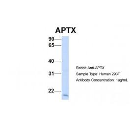 ARP32885_P050