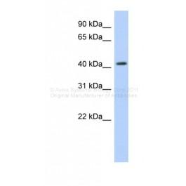 ARP33481_P050