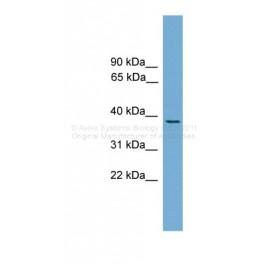 ARP37526_P050
