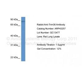 ARP43257_P050