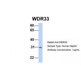 ARP44527_P050