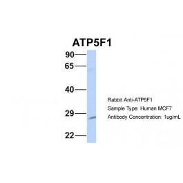 ARP48188_P050