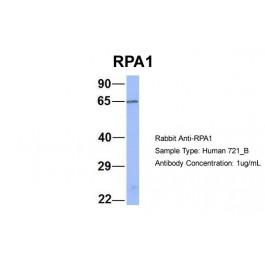 ARP56526_P050