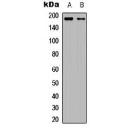 CPA4647-30ul