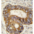 Formalin-fixed and paraffin-embedded human colon carcinoma tissue reacted with PHB2 Antibody (AP13987PU-N), which was peroxidase-conjugated to the secondary antibody, followed by DAB staining. This data demonstrates the use of this antibody for immunohistochemistry; clinical relevance has not been evaluated.