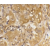 Immunohistochemical staining of human skin with Rabbit anti BIM antibody Cat.-No SP2116P