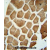 WDR49 antibody (C-term) (AP54547PU-N) immunohistochemistry analysis in formalin fixed and paraffin embedded human skeletal muscle followed by peroxidase conjugation of the secondary antibody and DAB staining. This data demonstrates the use of the WDR49 antibody (C-term) for immunohistochemistry. Clinical relevance has not been evaluated.