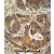 VPS52 antibody (C-term) (AP54517PU-N) immunohistochemistry analysis in formalin fixed and paraffin embedded human colon carcinoma followed by peroxidase conjugation of the secondary antibody and DAB staining. This data demonstrates the use of the VPS52 antibody (C-term) for immunohistochemistry. Clinical relevance has not been evaluated.