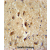 VITRN antibody (C-term) (AP54513PU-N) immunohistochemistry analysis in formalin fixed and paraffin embedded human brain tissue followed by peroxidase conjugation of the secondary antibody and DAB staining. This data demonstrates the use of the VITRN antibody (C-term) for immunohistochemistry. Clinical relevance has not been evaluated.