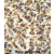 TTC39B antibody (C-term) (AP54399PU-N) immunohistochemistry analysis in formalin fixed and paraffin embedded human testis carcinoma followed by peroxidase conjugation of the secondary antibody and DAB staining. This data demonstrates the use of the TTC39B antibody (C-term) for immunohistochemistry. Clinical relevance has not been evaluated.