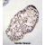 TSGA10IP Antibody (C-term) (AP54371PU-N)immunohistochemistry analysis in formalin fixed and paraffin embedded human testis tissue followed by peroxidase conjugation of the secondary antibody and DAB staining. This data demonstrates the use of TSGA10IP Antibody (C-term) for immunohistochemistry. Clinical relevance has not been evaluated.
