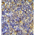 Immunohistochemistry analysis in formalin fixed and paraffin embedded human tonsil tissue using IKZF1/IKAROS antibody Cat.-No.AP52180PU-N (C-term), followed by peroxidase conjugation of the secondary antibody and DAB staining. This data demonstrates the use of the IKZF1 antibody for IHC. Clinical relevance has not been evaluated.