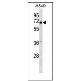 AP53330PU-N