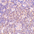 Immunohistochemical staining of human lymph node with Rabbit anti Human BAG1 (AP05586PU-N)