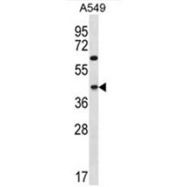 AP50412PU-N