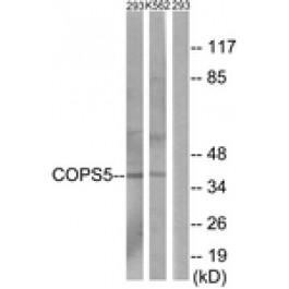 C11442-2
