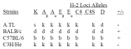 CL067P - MHC Class II I-Abd