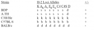 CL072B - MHC Class II I-Ap