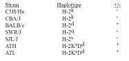 CL053P - MHC Class I H-2 Dd