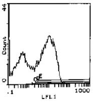 CL110 - CD44