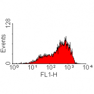 SM1778P - CD218a / IL18R1
