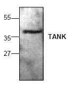 AP00107PU-N - TANK / ITRAF
