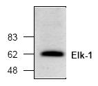 AP00137PU-N - ELK1