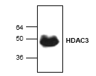 AP00272PU-N - HDAC3